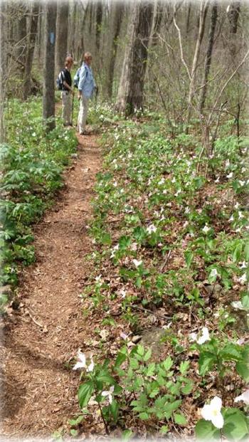 mimi hike